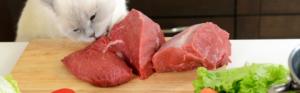 Brauchen Katzen nur Fleisch?