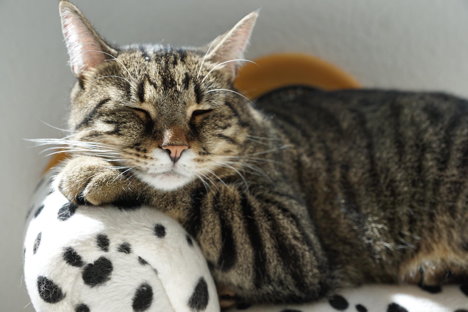 Unterstützung bei Tumoren von Hund und Katze