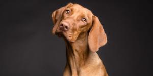 Kastration Hund