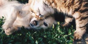Allergie bei Hund und Katze