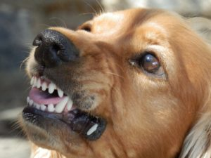 Verhaltensauffälliger Hund
